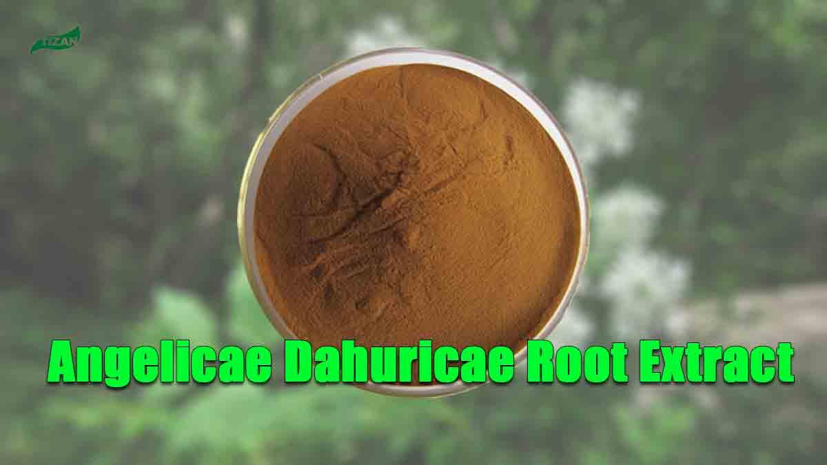 Angelica Dahurica Root Extract Powder Dahurian Angelica Extract