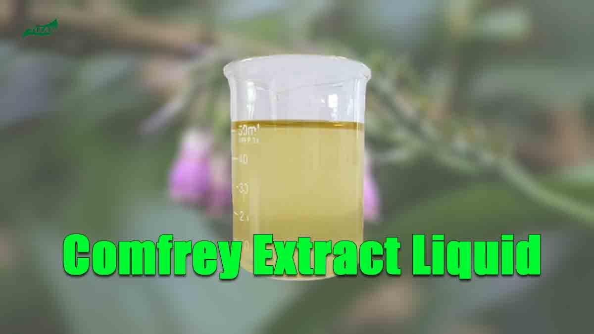 Comfrey Extract Liquid