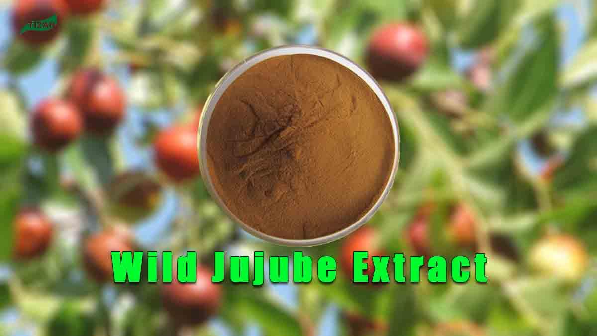 Wild Jujube Extract Jujuboside Powder