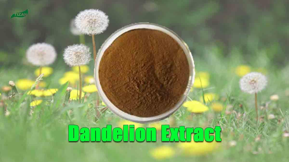 Dandelion Extract Flavonoids Powder
