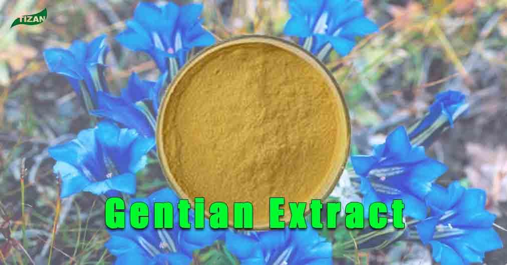 Gentian Root Extract Gentian Extract Powder
