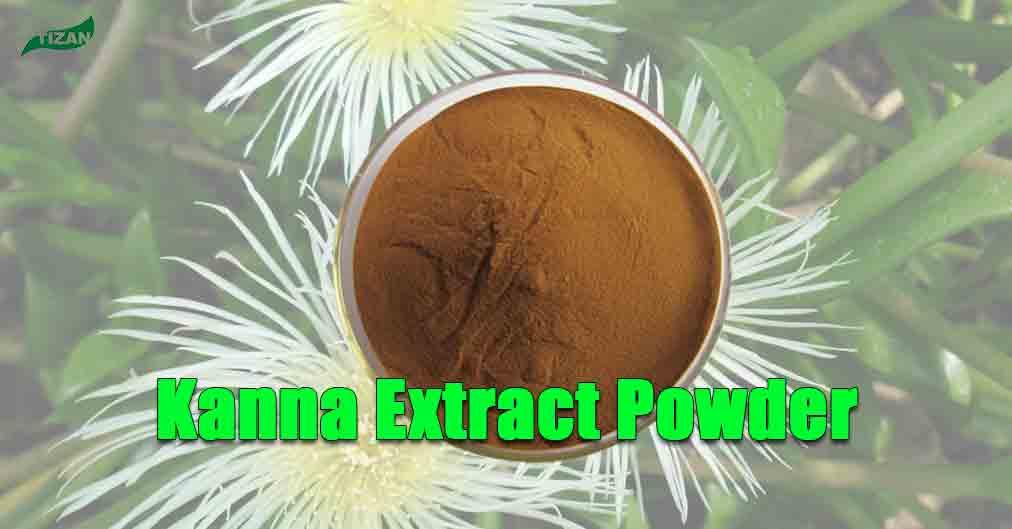 Kanna Extract Powder | Sceletium Tortuosum Extract