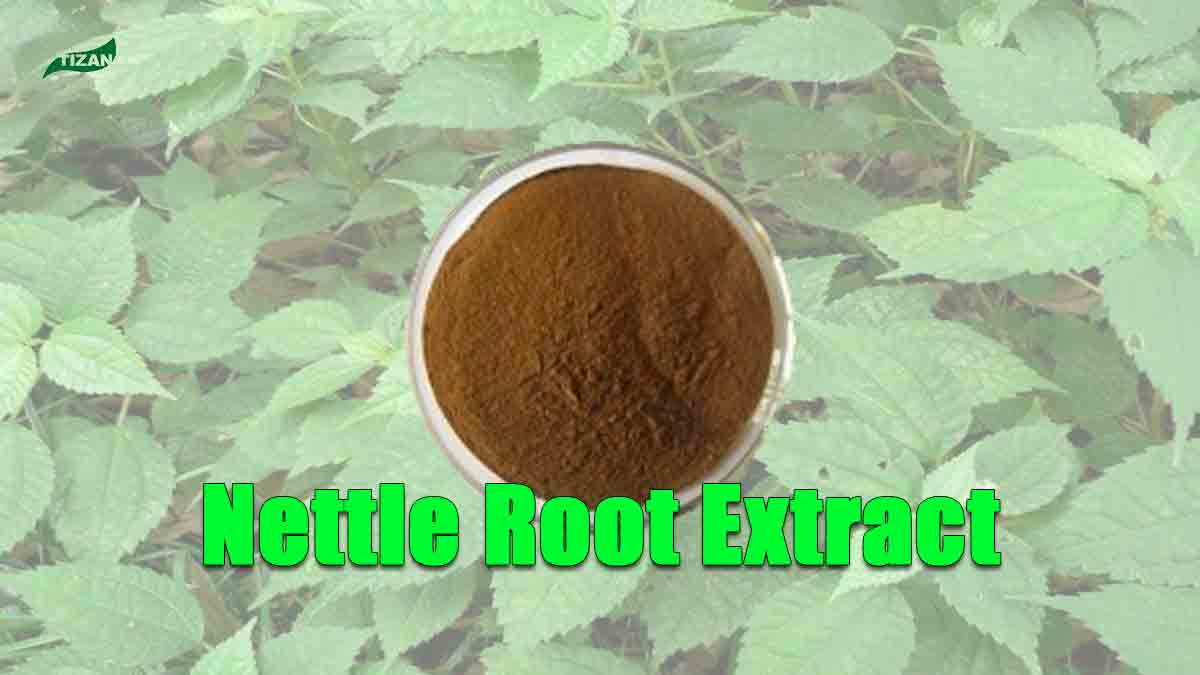 Nettle Root Extract Powder