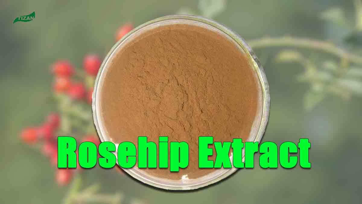 Rosehip Extract Powder Vitamin C
