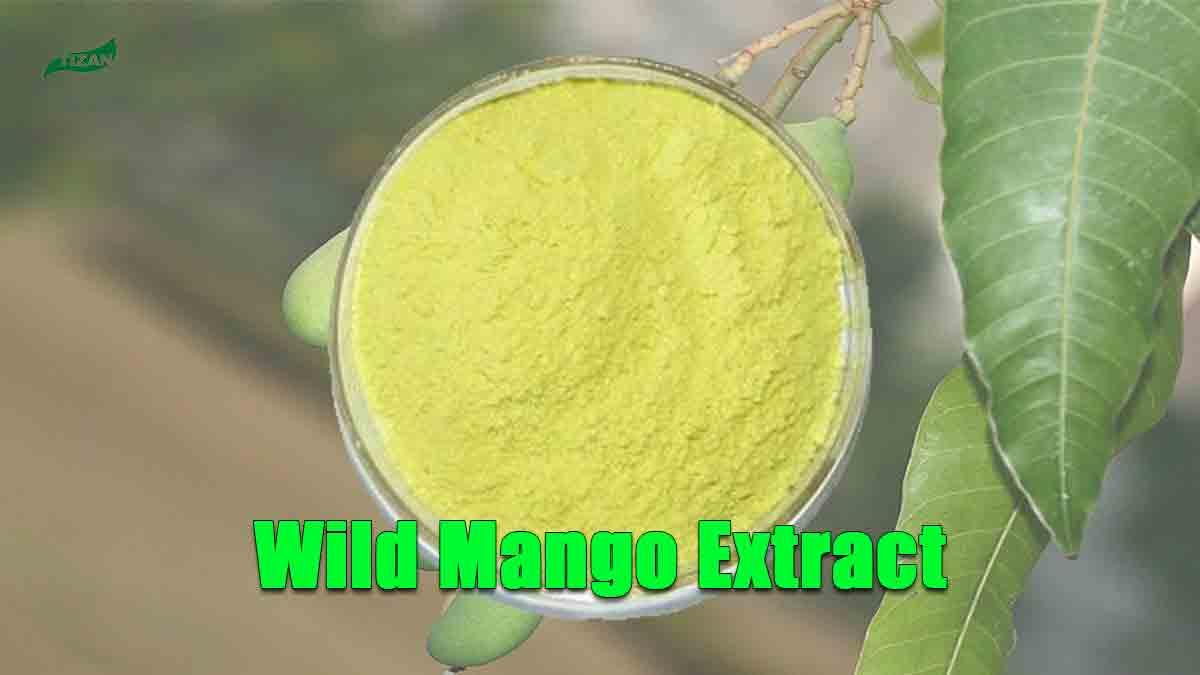 Wild Mango Extract Powder Mangiferin